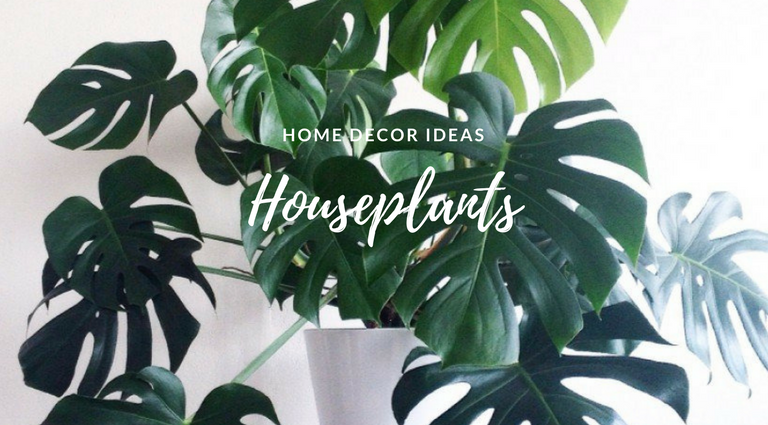 Summer Home Hack- The Houseplants That'll Change the Game_1 summer home Summer Home Hack: The Houseplants That'll Change the Game Summer Home Hack The Houseplants Thatll Change the Game feat 768x425