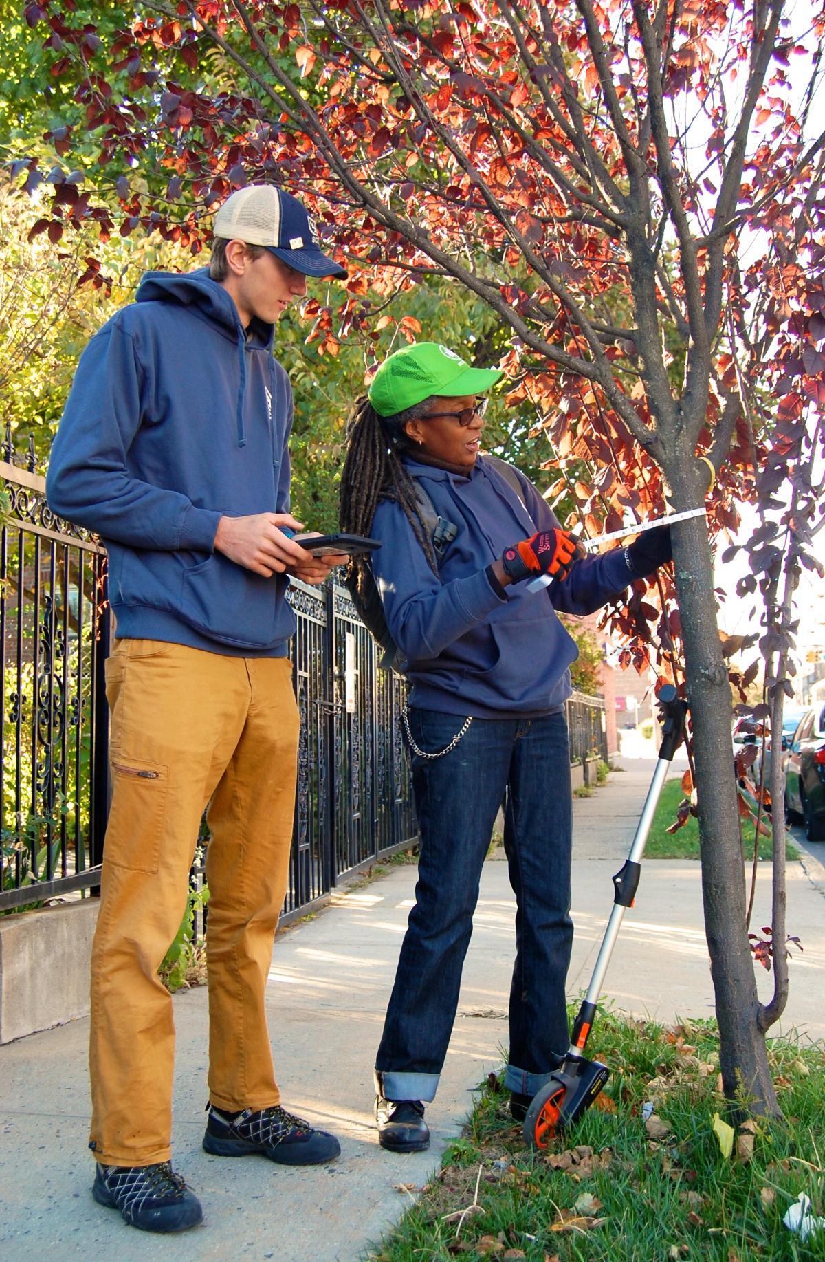 New York city has street trees all cataloged new york New York: city has street trees all cataloged New York city has street trees all cataloged 1