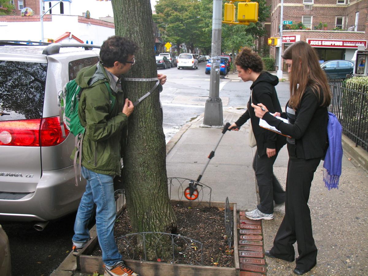 New York city has street trees all cataloged new york New York: city has street trees all cataloged New York city has street trees all cataloged 2