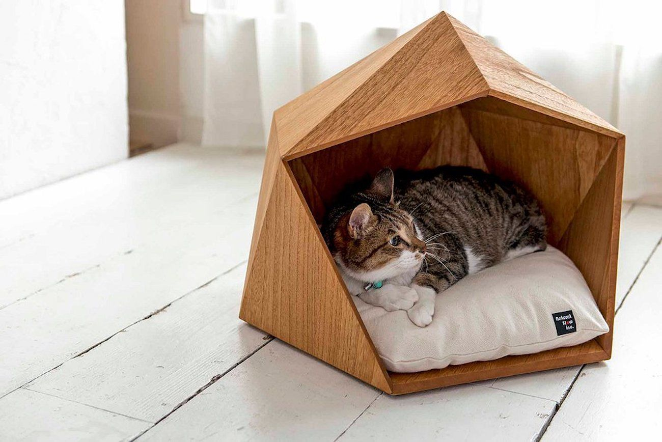 house for a cat House for a cat: let the pet also have its own personal space House for a cat let the pet also have its own personal space