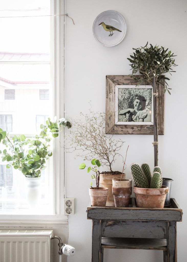 housewarming What to give for a housewarming: a few good ideas kukka