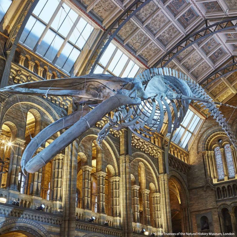 10 Unusual Things to Do in London this September unusual things to do in london 10 Unusual Things to Do in London this September 10 Unusual Things to Do in London this September 15