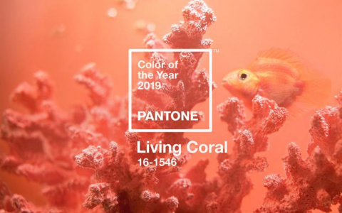 Introducing Pantone Color Of The Year 2019 Into Your Home Decor!_7 pantone color of the year 2019 Introducing Pantone Color Of The Year 2019 Into Your Home Decor! Introducing Pantone Color Of The Year 2019 Into Your Home Decor feat 480x300